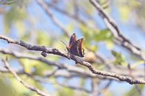 Butterfly on a tree by papallonari