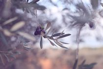 Purple olives von papallonari