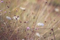 Wind von papallonari
