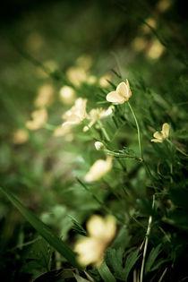 Tender Wild Flowers von olgasart