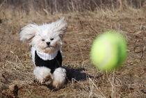 Let's Play Ball! von Lisa DiFruscio