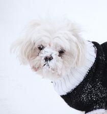 Coco Chanel Dog von Lisa DiFruscio