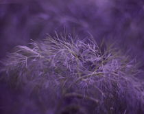 Dream Garden °3 von syoung-photography