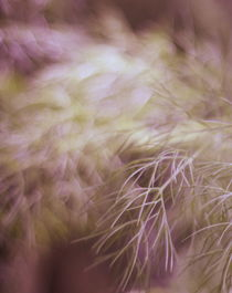 Dream Garden °2 by syoung-photography
