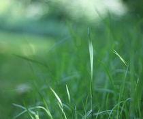 Green Gras Bokeh °2 by syoung-photography