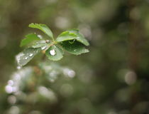 After Rain by syoung-photography