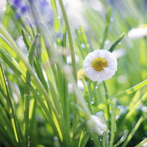 Sunny Summer Meadow von syoung-photography