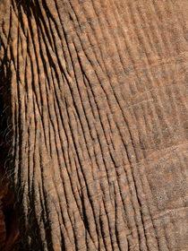 Elefant, Dickhäuter von pictaria
