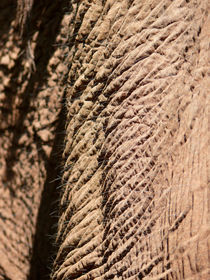 Elefant, Nahaufnahme der Elefantenhaut von pictaria