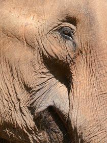 Elefant mit freundlichem Blick by pictaria