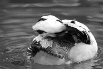 Ente schwarz-weiss von Nadine Müller