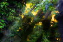Secret Forest von Richard Piper