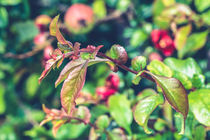 Apple Plant by Daniel Walsh