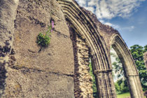 Clinging on Inchmahome Priory by Daniel Walsh