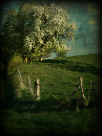 Frühling im Taunus von Elke Balzen