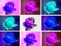 Harlequin-Roses -2- von Christine  Hofmann
