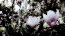 Dornröschentraum von florin
