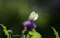 Resting Butterfly by pebblejarimages