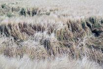 Weizen von Jens Berger