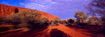 mulga am uluru (ayer ́s rock); australien, northern territory von helmut-krauss-panorama