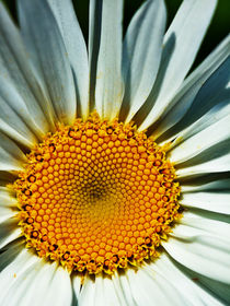 Flower No. 629 by Roger Brandt