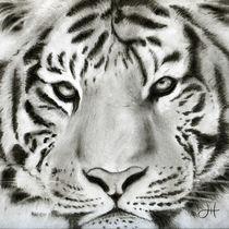 Tigerkohle2012