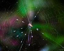 Come Into My Web by Roger Wedegis
