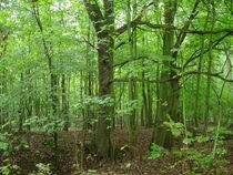 Grün im Wald by lorenzo-fp