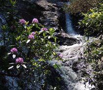 Glen River in the Mournes von John McCoubrey