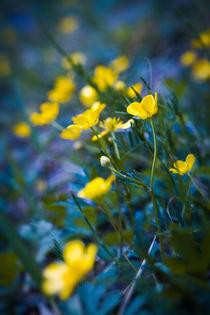 Magical Wild Flowers von olgasart