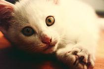 so ein katzenjammer by sommerpfuetze