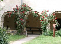 Rosenstöcke vor Arkade von Silke Bicker
