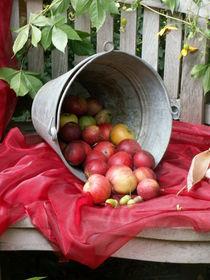 Rotbackige Äpfel von Silke Bicker
