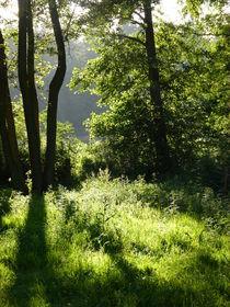 Waldlichtung von Corinna Schumann