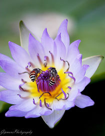 Liebesspiel der Blumen von Gipmans Photography