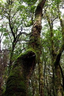 en el bosque by Gipmans Photography