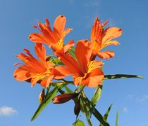 Orange Lilies by John McCoubrey