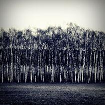 Schwarz Weiß Feld by Bastian  Kienitz