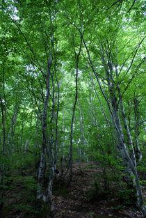 Forest von Tijana Krstevska