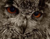 Eagle Owl Bird Of Prey by Julie  Callister