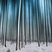 Winterwald von Horst Hoch
