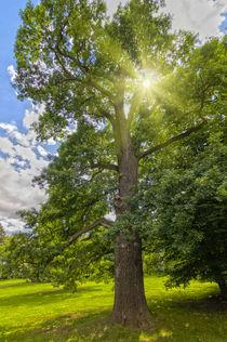 Strahlender Baum von leonardofranko