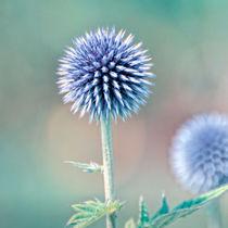 Soft blue stars von gnubier