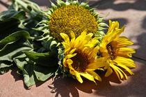 Sunflowers after VVG by Ilona Barna BIPHOTO