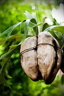 Plant von reorom