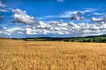 Golden Green by James Biggadike