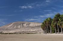 Los Gorriones de Fuerteventura by Gipmans Photography