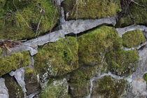 Moss and Stone by Beth Billian (Azraeya)