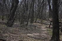 Beaten Path by Beth Billian (Azraeya)