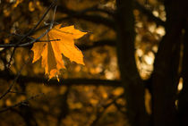 Gold leaf by photogatar